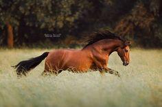 Beauty in motion!!