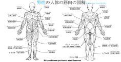 アニメ、マンガ、イラスト専用男性&女性人体の筋肉と図解简略化 [2]