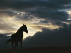 A Wild Horse is Silhouetted by the Setting Sun under Gathering Storm Clouds Photographic Print by Raymond Gehman at Art.com