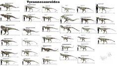 Tyrannosauroidea by Teratophoneus on DeviantArt
