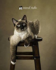 Kitty Cats, Cats And Kittens, Foto Fantasy, Cat House Diy, Calendar Ideas, Cat Photography, Puma, Cute Cats, Fur Babies