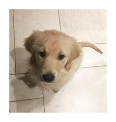 キスで彼女のママのおかげで覆われてしまったこの子犬: | 23 Golden Retriever Puppies Who'll Remind You There Are Still Good Things In This World