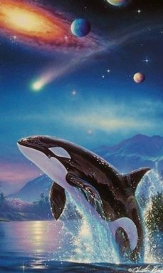 Scenic Wallpaper, Ocean Wallpaper, Nature Wallpaper, Beautiful Sea Creatures, Most Beautiful Animals, Orca Kunst, Animal Photography, Nature Photography, Orcas