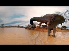 Elephants on the Brink (360 Video) - YouTube