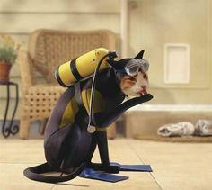 Hilarious kitty kat scuba suit!