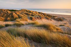 Braunton sands in North Devon, the largest sand dune system in England, UNESCO Biosphere Reserve, home to over 400 plant species