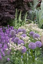 Purple and white garden.  Foxglove, allium and columbines and other perennials.  Would be a nice end treatment to the pastel garden.