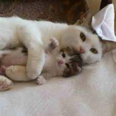 Animal moms - Bing Images