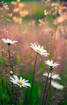 Wildflowers   In the Meadow   Field of Flowers-)