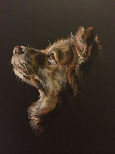 Pastel on card by Lucy Wilson, New Zealand. www.lucywilson-artist.com #animalart #collie
