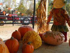 Pumpkins, gourds, and hayrides!