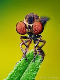 """Résultat de recherche d'images pour """"insecte"""""""