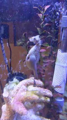 Happy Animals, Nature Animals, Animals And Pets, Beautiful Sea Creatures, Animals Beautiful, Cute Animal Videos, Funny Animal Pictures, Cute Little Animals, Cute Funny Animals