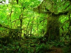 hoh rain forest, olympia WASHINGTON. Washington!! What? America is crazy.