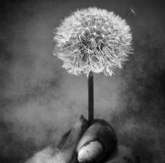 Blow Away... by Sabrina de Vries on 500px