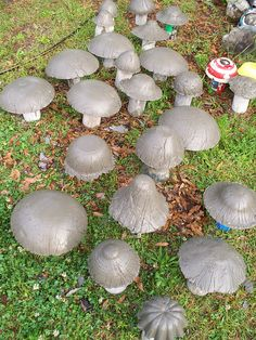 Mushrooms April 2012. I just removed all the molds.Every one is naked