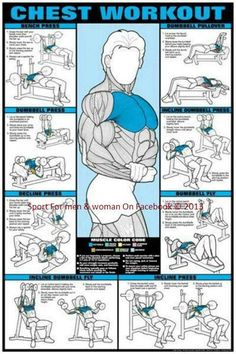 Chest Workout Professional Fitness Gym Wall Chart Poster - Fitnus Corp CO-ED Chest Workout Professional Fitness Gym Wall Chart Poster - Fitnus Corp.CO-ED Chest Workout Professional Fitness Gym Wall Chart Poster - Fitnus Corp. Great Chest Workouts, Best Chest Workout, At Home Workouts, Group Workouts, Gym Workouts For Men, Best Chest Exercises, Chest And Bicep Workout, Weight Lifting Workouts, Weight Lifters