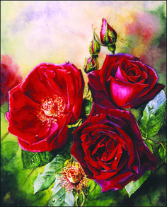 'Josephine Bruce'. Watercolor.   Painting by Susan Harrison-Tustain. I adore the deep velvety red texture and color of this sumptuous rose. The inner surface of each petal was so smooth and velvety whereas the outer surface was slightly shiny. This gave me a lovely contrast to work with - These differences help to make a paintings appear so rich and tangible! Painting by  http://www.susanart.com
