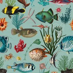 Ocean Fish Wallpaper duck egg teal coral REMOVABLE Peel and   Etsy Fish Wallpaper, Peel And Stick Wallpaper, Funky Wallpaper, Bathroom Wallpaper, Outdoor Cushion Covers, Teal Coral, Traditional Wallpaper, Easy Install, Textured Walls
