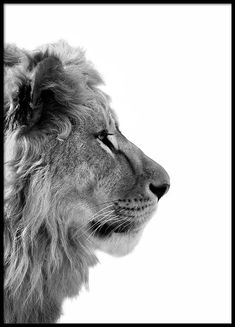 Lion From Side Poster in der Gruppe Poster / Größen und Formate / bei . Lion From Side Poster in Group Poster / Sizes and Formats / at Desenio AB Poster Mural, Print Poster, Lion Profile, Poster Photo, Elephant Poster, Groups Poster, Poster Sizes, Mode Poster