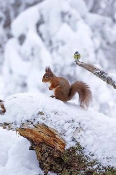 My two favourite animals in the 'wild': the red squirrel and the blue tit bird.