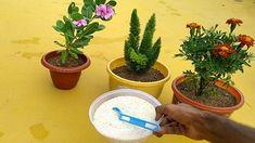 Easy and Home made Fertilizer Home Made Fertilizer, Organic Liquid Fertilizer, Vitamins And Minerals, Modern Design, Planter Pots, Rice, Homemade, Make It Yourself, Water