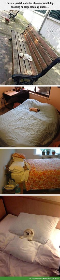 Small dogs snoozing on large sleeping places