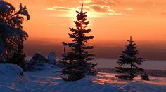 зима в Карпатах от etnosvit.com