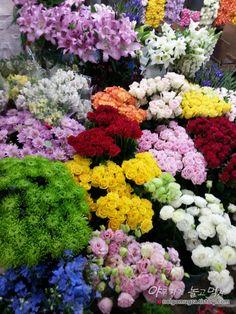 야무지게 놀고먹자 :: [양재 꽃시장] 봄맞이 꽃구경 맘껏 할수 있는 꽃시장 나들이.