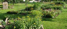 Pohled do KYBY zahrady Plants, Plant, Planets