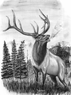 Elk Head Clip Art | Elk Horn Drawings http://www.charcoal-drawings-prints.com/gallery ...