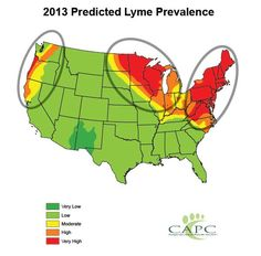 2013 Lyme Disease Threat Extremely High - Protect Yourself and Your Pet | Pets & Parasites: The Pet Owner's Parasite Resource