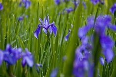 _MG_3370 Love Flowers, Four Seasons, Happy, Nature, Plants, Spring, Naturaleza, Seasons Of The Year, Ser Feliz