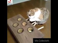 Cat playing with fun - Cat Funny Videos