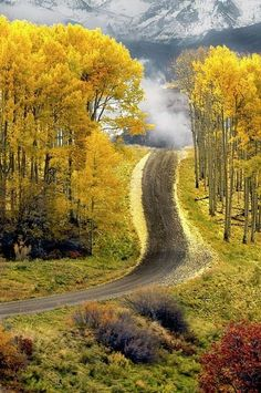 Cutting through the aspens on a mountain road in Colorado • photo: Dave Mills on FineArtAmerica