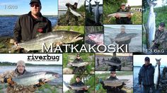 Tornio River midsummer RiverBug tube fly catches and pictures from customers. #riverbug #rivertube www.riverbug.fi