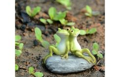 A couple of frog buddies taking time out to enjoy the day.