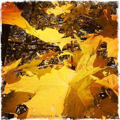 Impressionen von Stenorkunst – Herbst, goldener Herbst | Stenorkunst