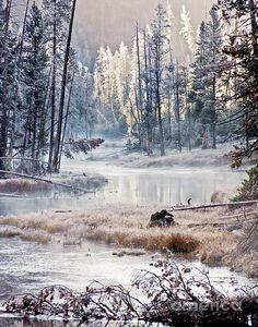 ✮ Winter Wonderland in Yellowstone National Park