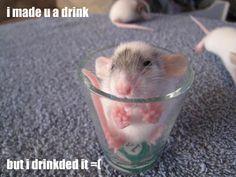 i made u a drink but i drinkded it =( (http://icanhasrats.com)