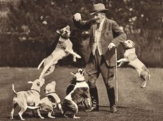 TOM WALL AND HIS STAFFORDSHIRE BULL TERRIER DOGS