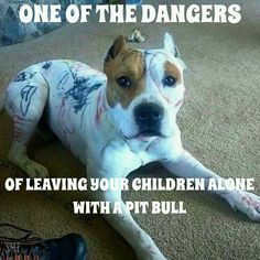 Uplifting So You Want A American Pit Bull Terrier Ideas. Fabulous So You Want A American Pit Bull Terrier Ideas. Animals And Pets, Funny Animals, Cute Animals, I Love Dogs, Cute Dogs, Dog Shaming, Pit Bull Love, Pitbull Terrier, Bull Terriers