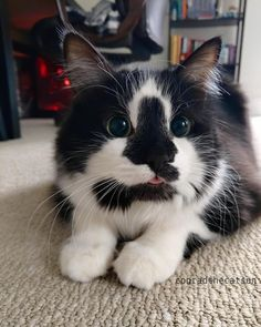say hello to Conrad! via aww on April 16 2019 at Cute Cats And Kittens, Baby Cats, I Love Cats, Cool Cats, Kittens Cutest, Cute Little Animals, Cute Funny Animals, Pretty Cats, Beautiful Cats