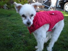Lucas turns 19!  He's having a good time outside in his favorite red coat.  Vitality is one of his favorite supplements for feeling young. www.epicpethealth.com/products/vitality Pet Health, Feelings, Pets, Coat, Animals, Products, Sewing Coat, Animales, Animaux