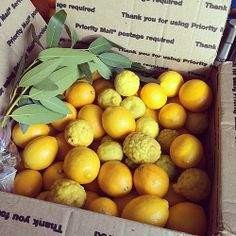 Meyer lemons and kaffir lines from the Lemon Ladies! Truly the best citrus source around.