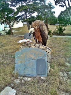 Vulture sitting on a headstone, tombstones, grave marker, cemetery cemetery . Cemetery Monuments, Cemetery Statues, Cemetery Headstones, Old Cemeteries, Cemetery Art, Graveyards, Cemetery Dance, La Danse Macabre, Art Sculpture