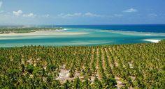 Incrível praia do Gunga em Maceió, Alagoas