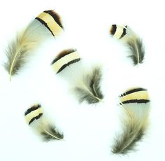Partridge Plumage, Chukar Plumage, per ounce This Natural Partridge Body Feather Plumage has over 500 loose feathers in each package, sold at a wholesale price right here in the USA with quick shipping! Turkey Feathers, Pheasant Feathers, Peacock Feathers, Feather Fashion, Peacock Bird, Feather Hat, Partridge, Edwardian Era, Glam Rock