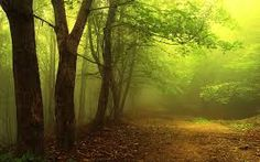 Image result for forest