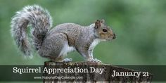 #SquirrelAppreciationDay was created by Christy Hargrove in 2001 for people to appreciate squirrels more. Each morning when I leave for work I try to put out some peanuts or something for the squirrels in the neighborhood. Whatever I put out is gone every day when I get home!